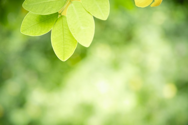 Close up of nature view green leaf on blurred greenery background under sunlight with bokeh and copy space.