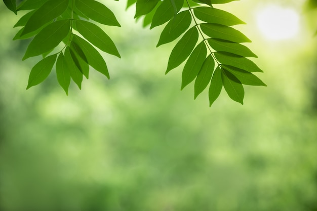 Close up of nature view green leaf on blurred greenery background under sunlight with bokeh
