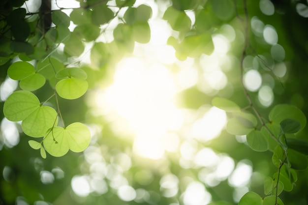 Close up of nature view green orchid tree leaf on blurred greenery background