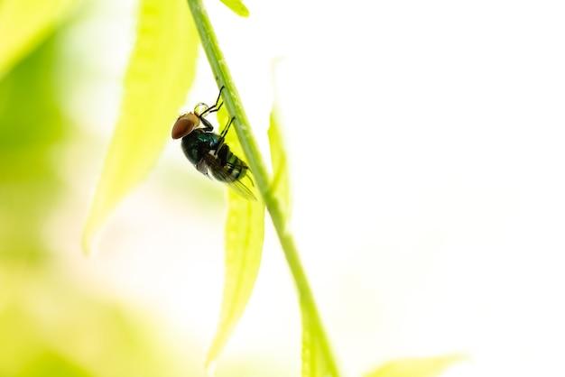닫기 : 자연 생태 배경, 곤충 매크로 사진으로 사용하기위한 복사 공간이있는 나뭇 가지에 파리의 자연보기