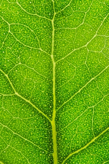 녹색 잎의 근접 신경