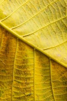노란 잎의 근접 신경