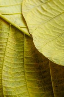 노란 잎의 신경의 클로즈업