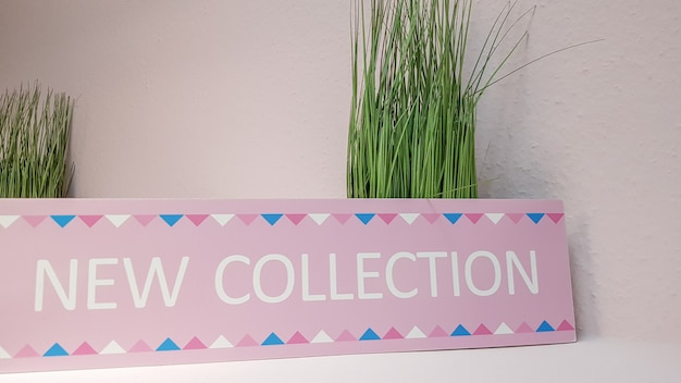 Close-up of a new pink collection plate on a shelf with green flowers on a light wall background with copy space. a new collection of women's clothing.