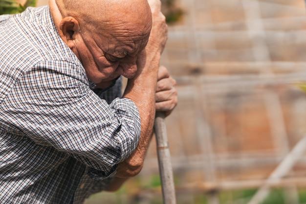 초점이 맞지 않는 배경을 가진 과수원에서 일하는 80세 남성의 클로즈업