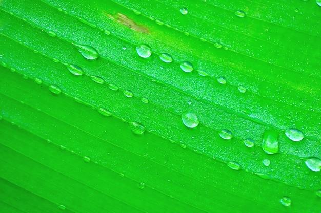 雨滴とバナナの木の葉のクローズアップ