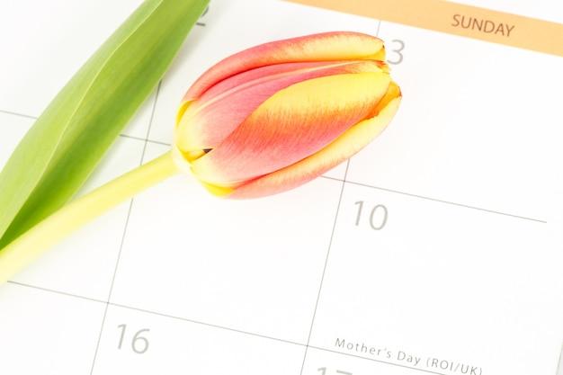 어머니의 날을 표시하는 달력에 아름다운 튤립의 닫습니다