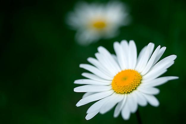美しい白い花のクローズアップ