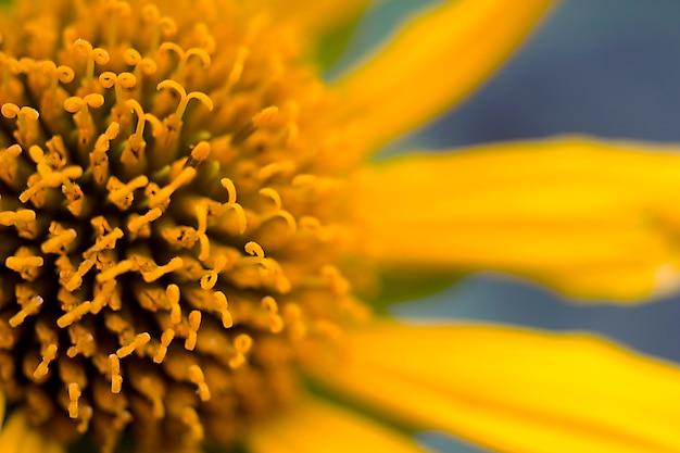美しい黄色の花のクローズアップ