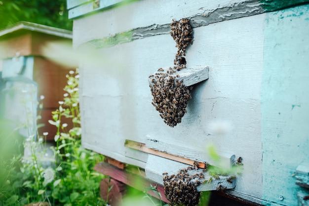 養蜂場の木の巣箱の蜂の群れのクローズアップ。
