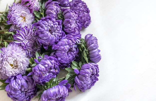 Крупным планом букет из свежих синих хризантем на белом фоне, копией пространства.