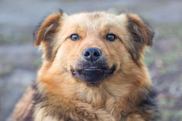 ぼやけて背景に茶色の犬のクローズアップ