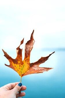 青い海に対する少女の手の茶色の乾燥した黄色のカエデの葉のクローズアップ。