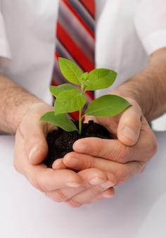 ビジネスマンの手のクローズアップは緑の植物をカップします