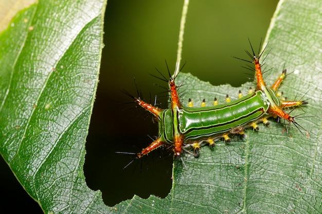 Крупным планом гусеницы на ветке дерева