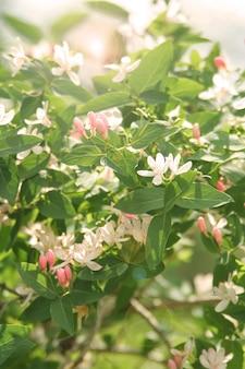 暖かい日に日差しの背景に桜の枝のクローズアップ。