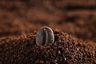 Close-up of a coffee bean