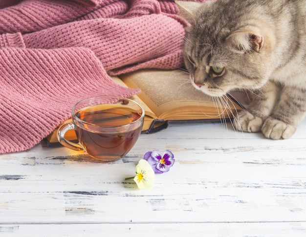 一杯のお茶、開いた本、白い木製のテーブルの灰色の猫のクローズアップ。無料のコピースペース。