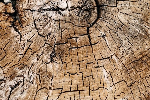 切り取った古い木の幹のクローズアップ