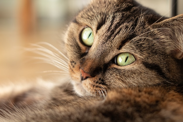 바닥에 누워 아름다운 녹색 눈을 가진 국내 고양이의 근접