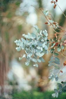 녹색 잎을 가진 나무에 유칼립투스 지점의 클로즈업