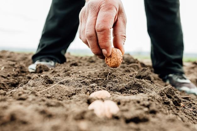 호두와 함께 토양에 씨앗을 심고 파종하는 농부 손의 닫습니다. 배경, 농업 및 새로운 생활 시작 개념