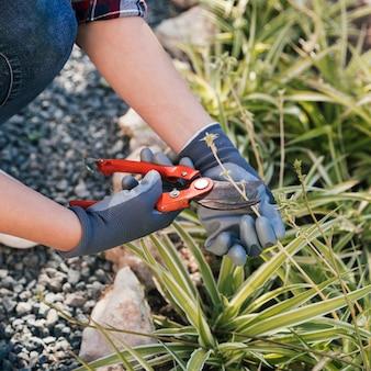 Крупный план женского садовника, обрезка растений в саду