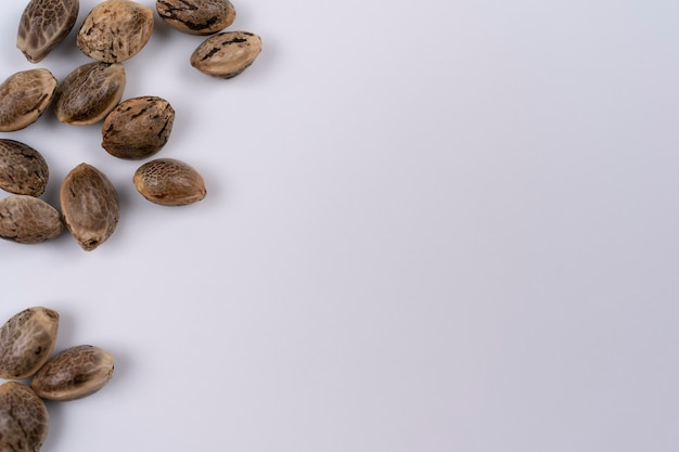 Крупным планом несколько семян конопли, разложенных на белом фоне, семя сверху с копией пространства
