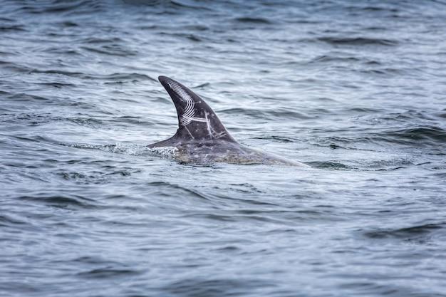 イルカのひれの指先のクローズアップ