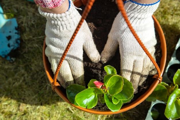 晴れた日に鉢に花を植える家庭用手袋の庭師の手のクローズアップ。上面図