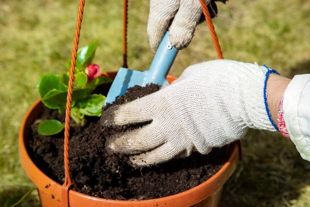 晴れた日に鉢に花を植える家庭用手袋の庭師の手のクローズアップ