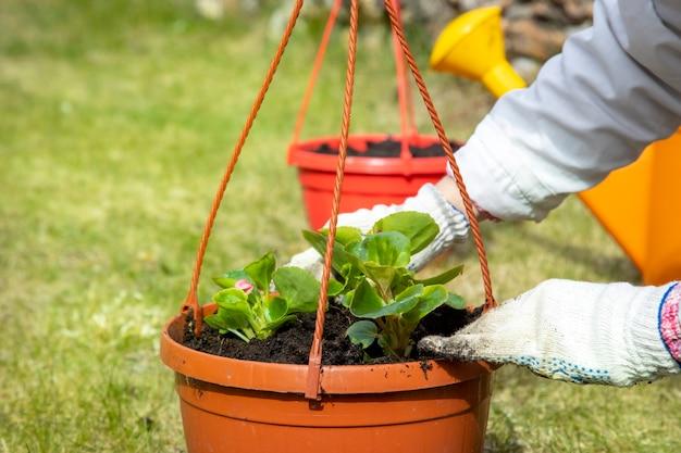 緑の草の上の鍋に花を植える庭師の手のクローズアップ