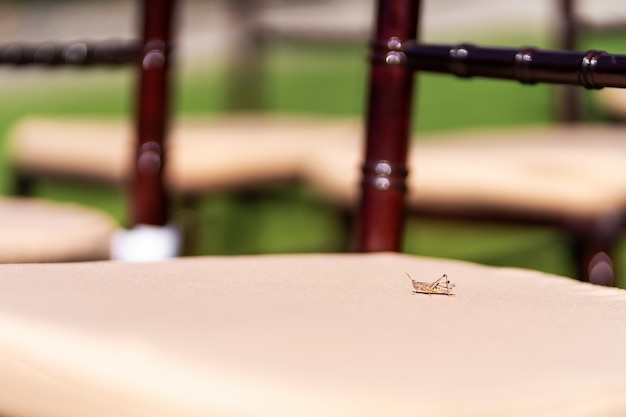 Крупный план кузнечика на стуле