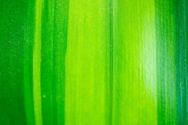 観葉植物からの緑の葉のクローズアップ