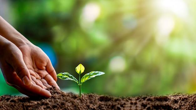 묘목 심기, 지구의 날 개념 및 지구 온난화 감소 캠페인을 포함하여 묘목을 들고있는 인간 손의 클로즈업.