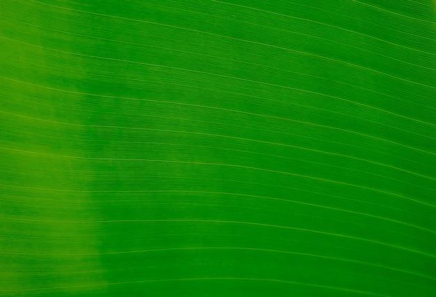 抽象的な曲線と縞模様の自然なバナナの緑の葉のクローズアップ