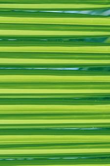 パターンとテクスチャのクローズアップ緑のヤシの葉。