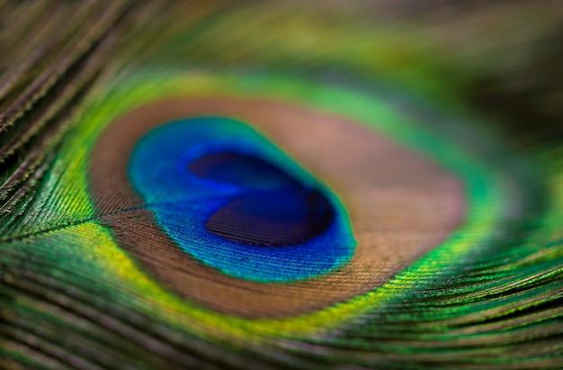 フレーム、明るい動物の表面を埋める孔雀の羽のクローズアップ