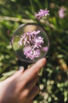 꽃 위에 돋보기를 들고 사람의 손 클로즈업