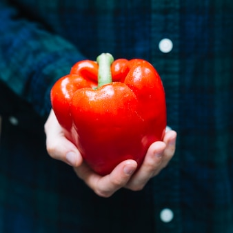 Close-up of a person's hand holding red bell pepper
