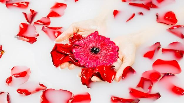 赤い花と花びらをスパバスで牛乳を持っている人の手のクローズアップ