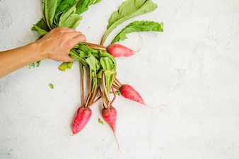 Close-up of a person's hand holding red radish against white textured background