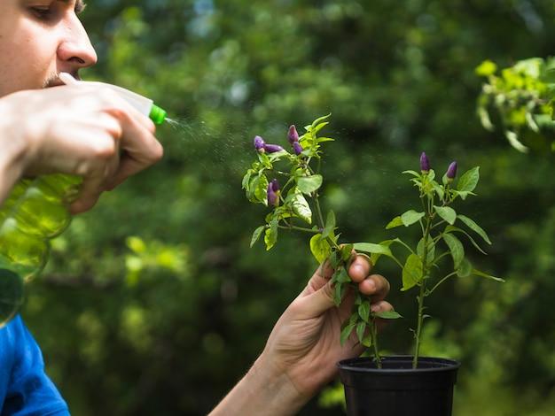 신선한 식물에 물을 분사하는 사람의 근접 촬영