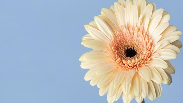 예쁜 피어 있던 꽃의 근접 촬영