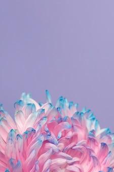 예쁜 분홍색과 파란색 꽃의 근접 촬영