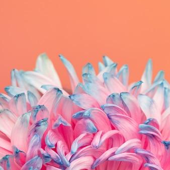 かわいらしいピンクとブルーの花のクローズアップ