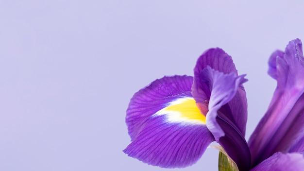 きれいな紫色の花のクローズアップ