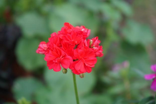 Крупным планом красный цветок с размытым фоном