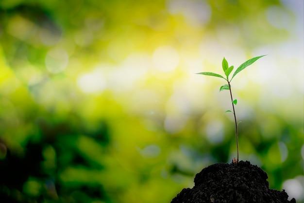Крупный план саженца дерева, выходящего из холма с красивым солнечным светом.