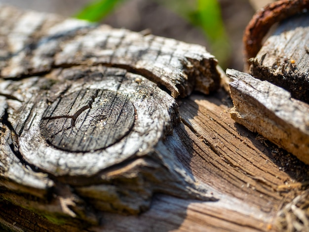 Крупный план ветки распиленного дерева. выборочный фокус, абстрактное изображение, текстура